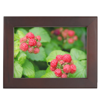 USA, Massachusetts, Nantucket. Ripe Raspberries Keepsake Box