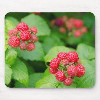 USA, Massachusetts, Nantucket. Ripe Raspberries Mouse Mat