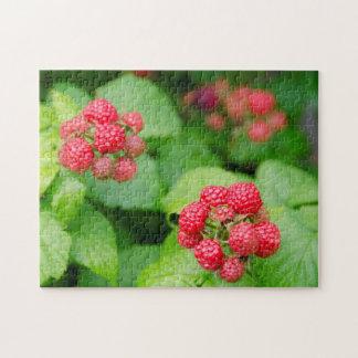 USA, Massachusetts, Nantucket. Ripe Raspberries Puzzles