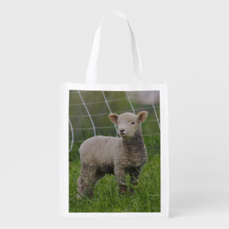 USA, Massachusetts, Shelburne. A lamb with Reusable Grocery Bag
