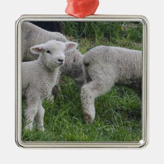 USA, Massachusetts, Shelburne. Lambs walk and Silver-Colored Square Decoration
