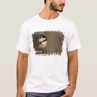 USA, Michigan. Black-capped chickadee perched T-Shirt