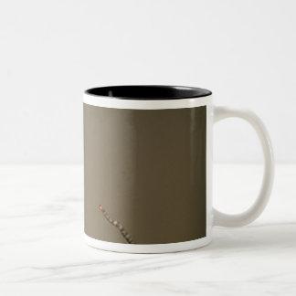 USA, Michigan. Black-capped chickadee perched Two-Tone Coffee Mug