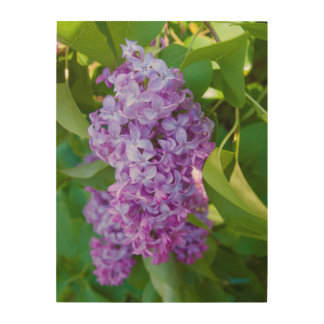 USA, Michigan. Blooming French Lilac Wood Wall Art