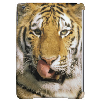 USA, Michigan, Detroit. Detroit Zoo, tiger