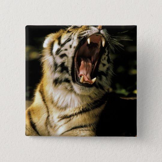 USA, Michigan, Detroit. Detroit Zoo, tiger 2 15 Cm Square Badge