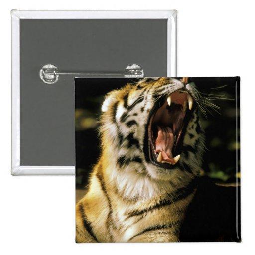 USA, Michigan, Detroit. Detroit Zoo, tiger 2 15 Cm Square Badge