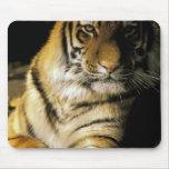 USA, Michigan, Detroit. Detroit Zoo, tiger 3 Mouse Pad
