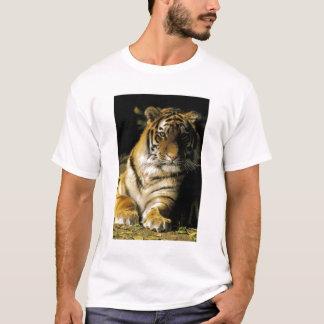 USA, Michigan, Detroit. Detroit Zoo, tiger 3 T-Shirt