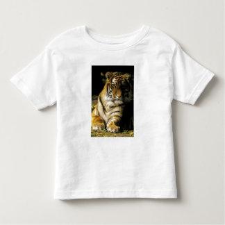 USA, Michigan, Detroit. Detroit Zoo, tiger 3 Toddler T-Shirt