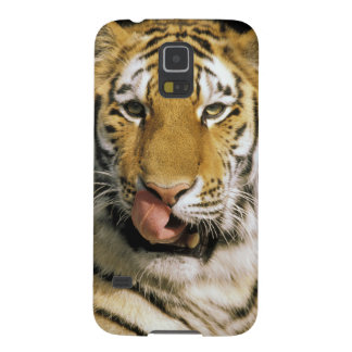 USA, Michigan, Detroit. Detroit Zoo, tiger Case For Galaxy S5