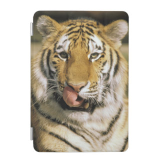 USA, Michigan, Detroit. Detroit Zoo, tiger iPad Mini Cover