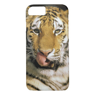 USA, Michigan, Detroit. Detroit Zoo, tiger iPhone 7 Case