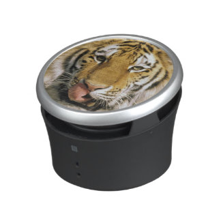 USA, Michigan, Detroit. Detroit Zoo, tiger Speaker