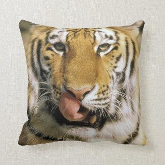 USA, Michigan, Detroit. Detroit Zoo, tiger Throw Pillow