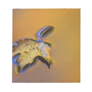 USA, Michigan, Maple leaf floating on water Notepad