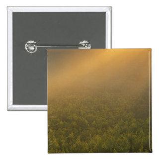 USA, Michigan, Meadow of goldenrod plants 15 Cm Square Badge