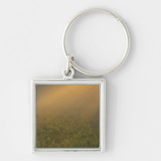 USA, Michigan, Meadow of goldenrod plants Key Ring