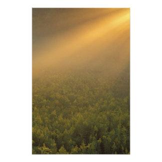 USA, Michigan, Meadow of goldenrod plants Photo