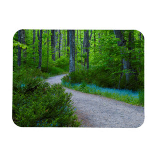 USA, Michigan. Path Thru The Woods Magnet