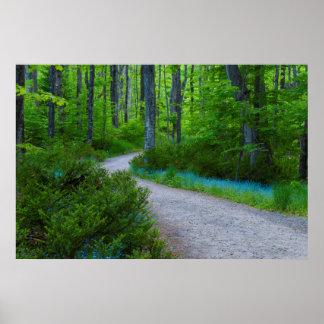 USA, Michigan. Path Thru The Woods Poster