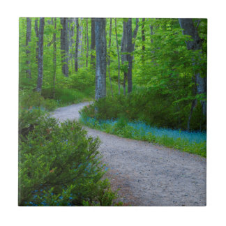 USA, Michigan. Path Thru The Woods Small Square Tile