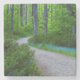 USA, Michigan. Path Thru The Woods Stone Beverage Coaster