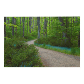 USA, Michigan. Path Thru The Woods Wood Canvases