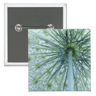 USA, Michigan. Queen-Anne's Lace viewed from 15 Cm Square Badge