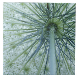 USA, Michigan. Queen-Anne's Lace viewed from Large Square Tile