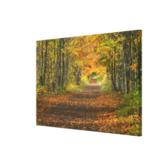 USA, Michigan, Upper Peninsula. Roadway into Stretched Canvas Prints