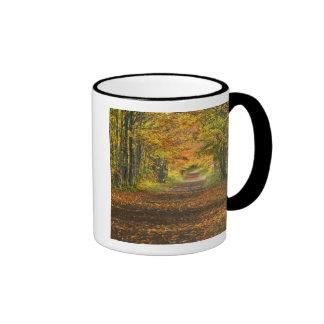 USA, Michigan, Upper Peninsula. Roadway into Mug