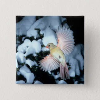 USA, Minnesota, Mendota Heights, Female Cardinal 15 Cm Square Badge