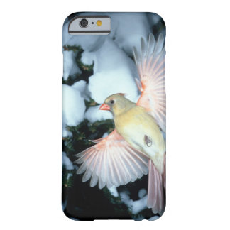 USA, Minnesota, Mendota Heights, Female Cardinal Barely There iPhone 6 Case