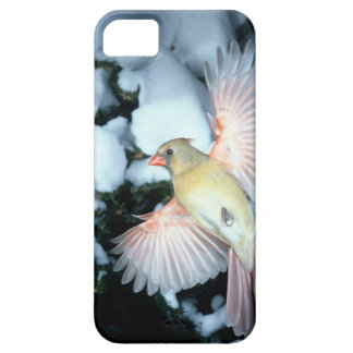 USA, Minnesota, Mendota Heights, Female Cardinal iPhone 5 Cover