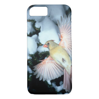 USA, Minnesota, Mendota Heights, Female Cardinal iPhone 8/7 Case