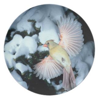 USA, Minnesota, Mendota Heights, Female Cardinal Plate