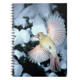 USA, Minnesota, Mendota Heights, Female Cardinal Spiral Note Book