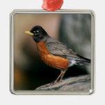USA, Minnesota, Mendota Heights, male Robin Ornaments