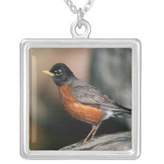 USA, Minnesota, Mendota Heights, male Robin Silver Plated Necklace