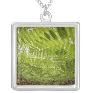 USA, MInnesota, North Shore Lake Superior, Silver Plated Necklace