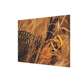 USA, Minnesota, Pembina Trail Preserve. Canvas Print