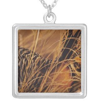 USA, Minnesota, Pembina Trail Preserve. Silver Plated Necklace