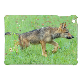 USA, Minnesota, Sandstone, Minnesota Wildlife 10 iPad Mini Covers
