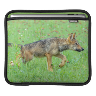 USA, Minnesota, Sandstone, Minnesota Wildlife 10 iPad Sleeve