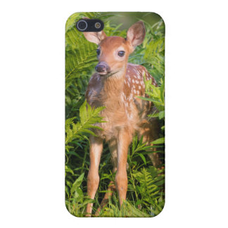USA, Minnesota, Sandstone, Minnesota Wildlife 10 iPhone 5 Cover
