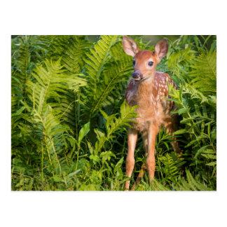 USA, Minnesota, Sandstone, Minnesota Wildlife 10 Postcards
