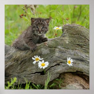 USA, Minnesota, Sandstone, Minnesota Wildlife 10 Poster