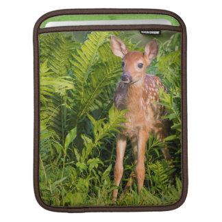 USA, Minnesota, Sandstone, Minnesota Wildlife 10 Sleeve For iPads