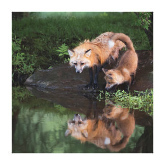 USA, Minnesota, Sandstone, Minnesota Wildlife 11 Gallery Wrapped Canvas